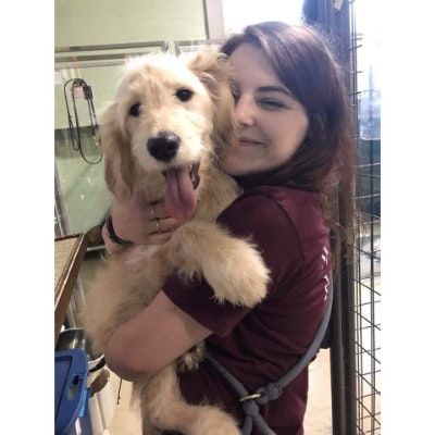 dog walker Chinia