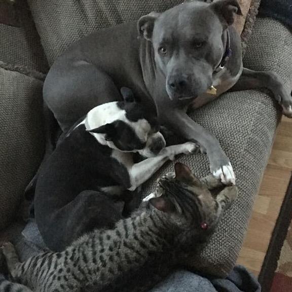 Vanessa's dog day care