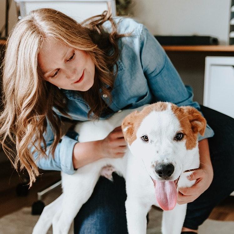 Amanda's dog day care