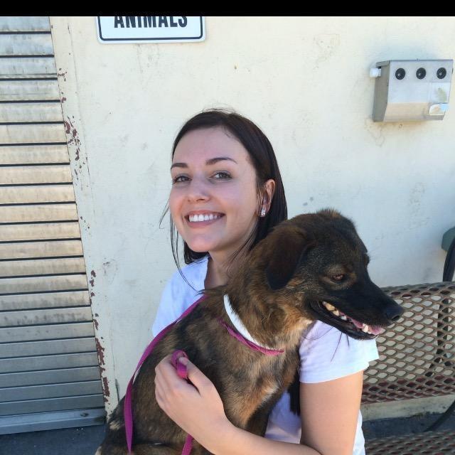 Kayli's dog day care