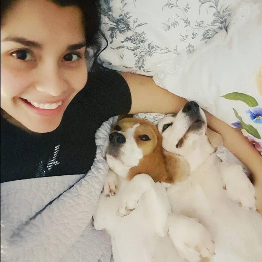 Ana Lucia's dog day care