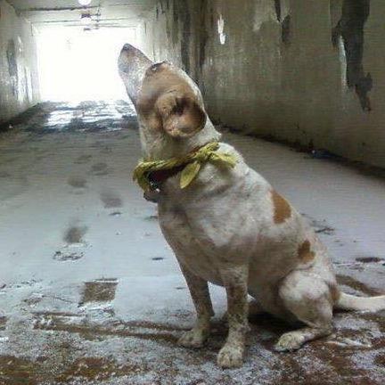 dog walker Javier