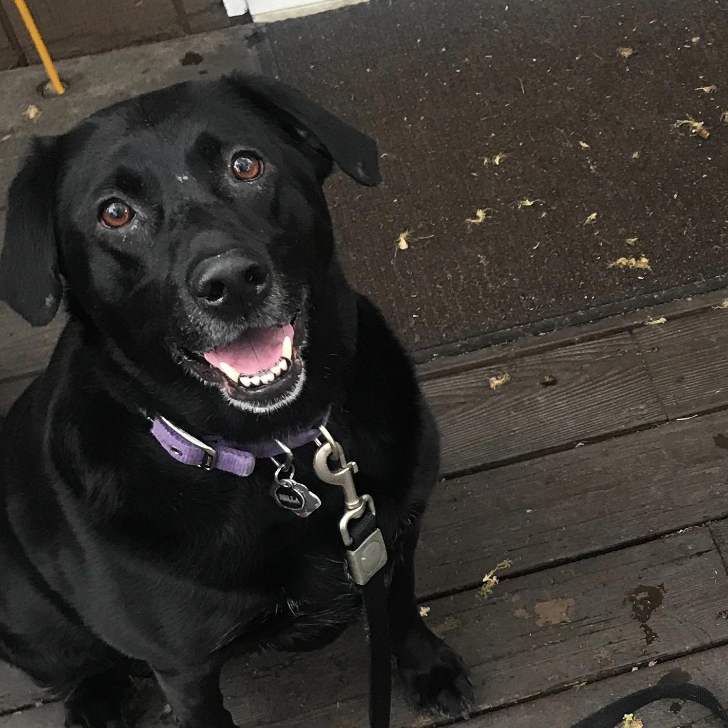Macy's dog boarding