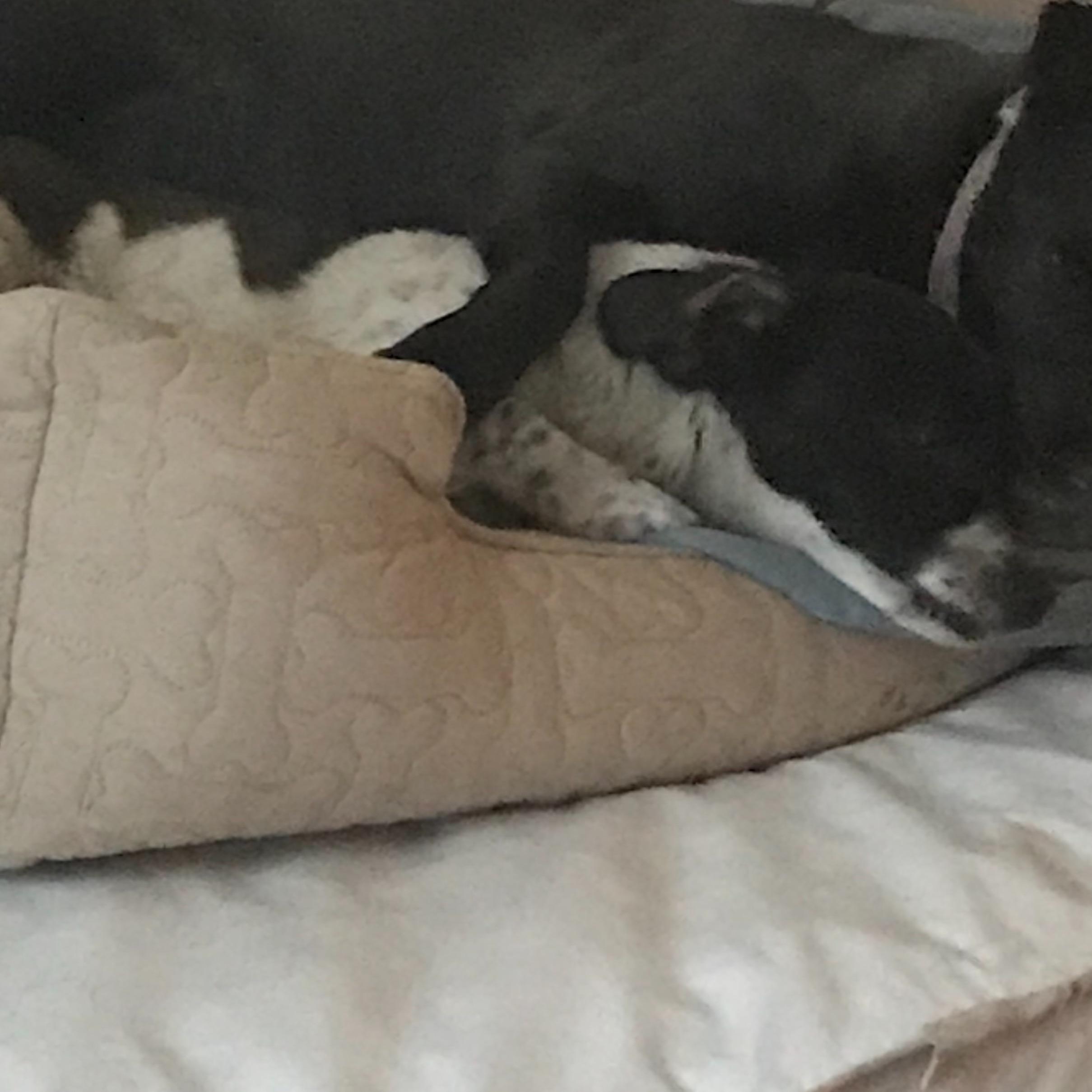 Liliana's dog day care