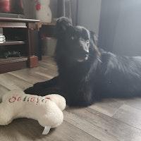 Terra's dog boarding