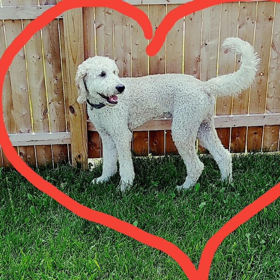 Bobbie's dog day care