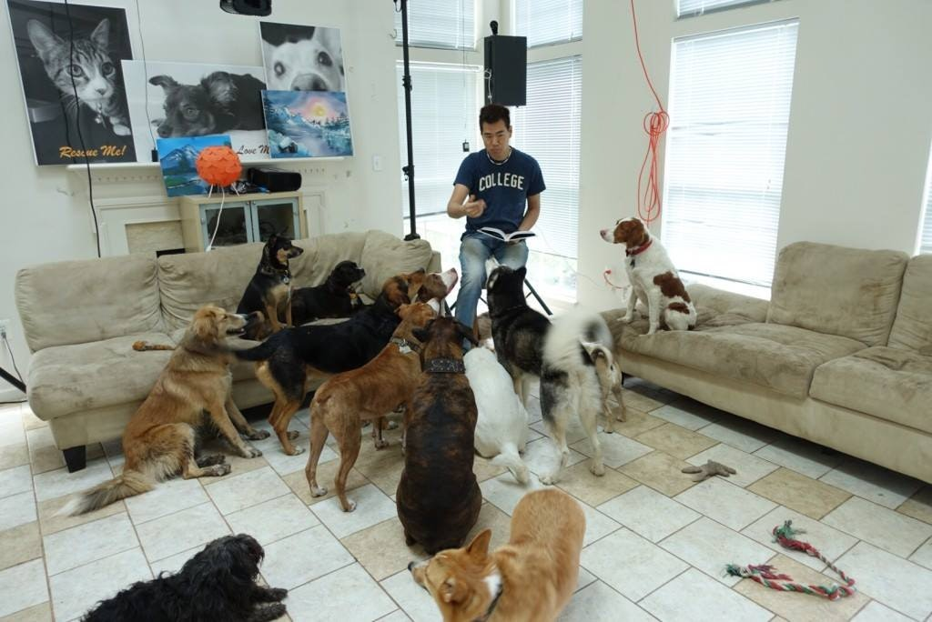 Ming's dog day care