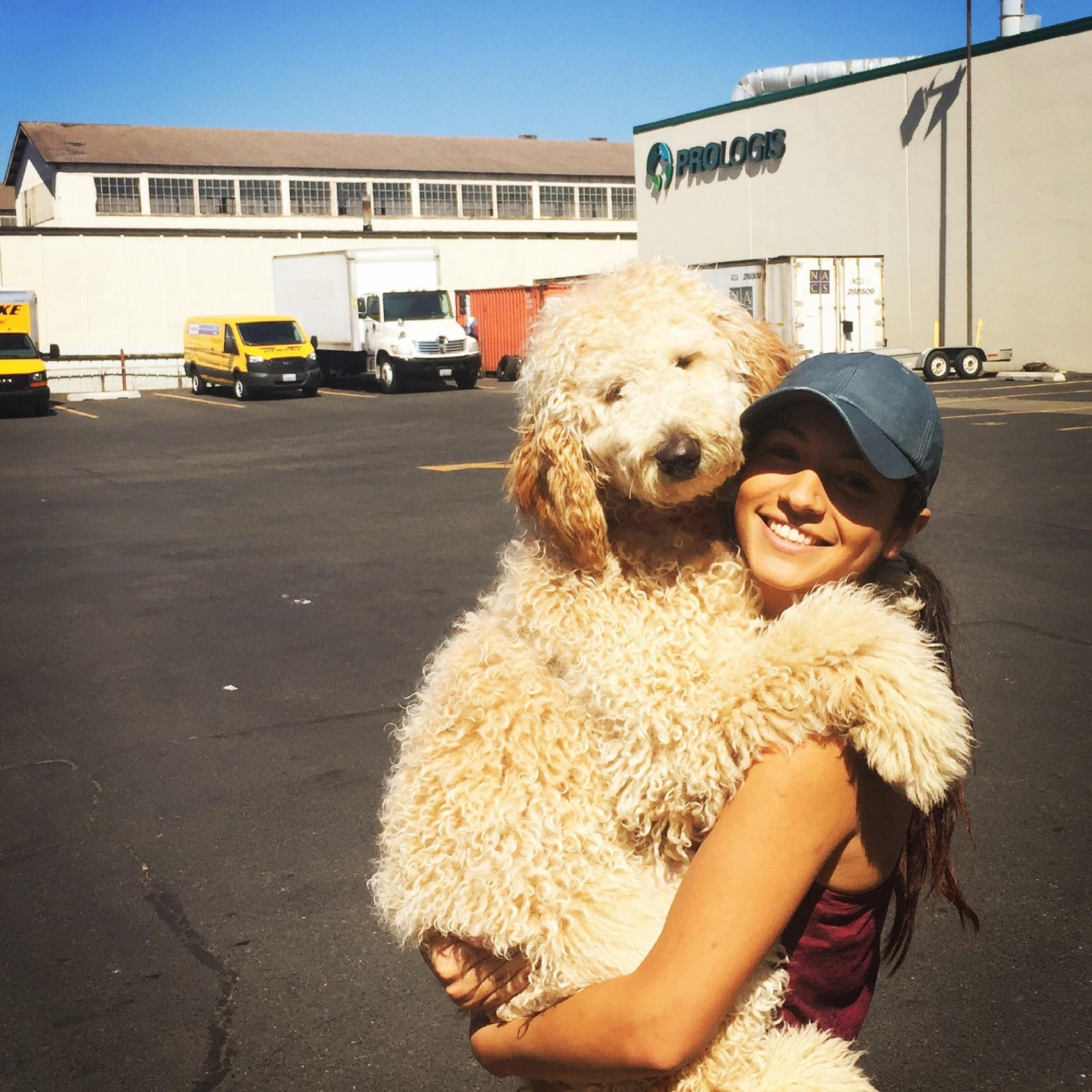 Cinthia's dog day care