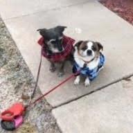 dog walker Carol