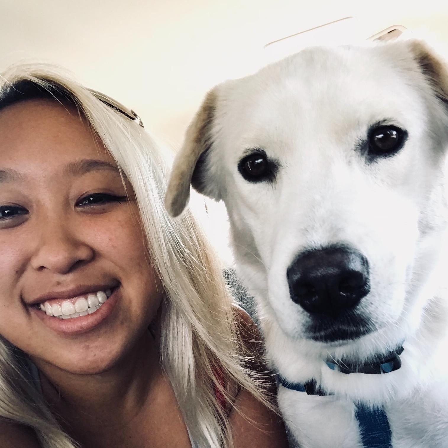 Sheryl's dog day care