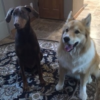 Lisa & Mark's dog day care