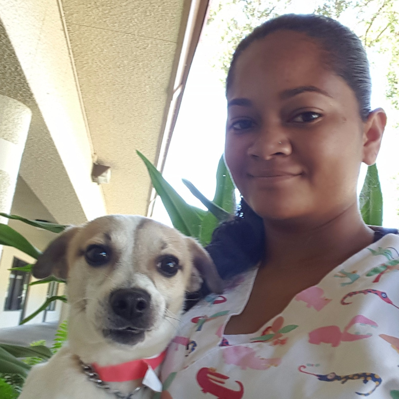 dog walker Maile