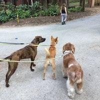 dog walker Starr