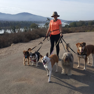 Claudia M's dog boarding