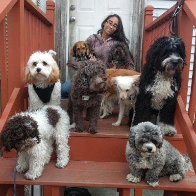 dog walker Tiffany & Steve