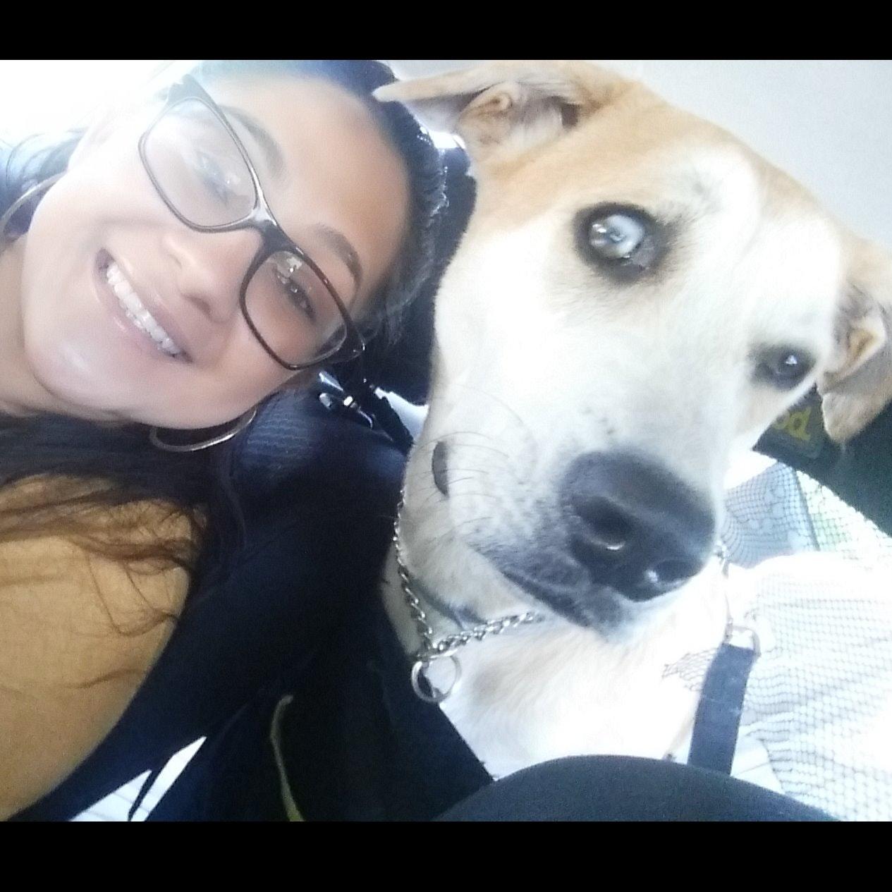 Alicia's dog day care