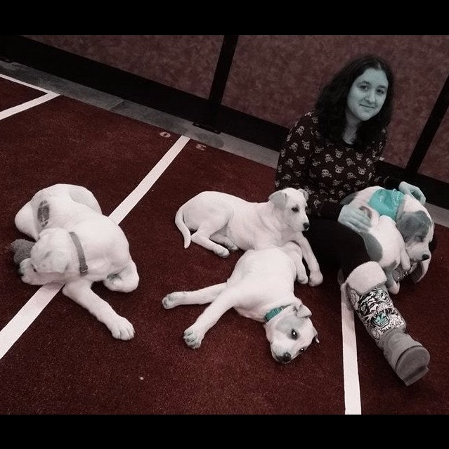 Noelle's dog day care