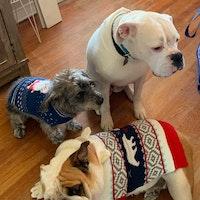 Jose & Vaney's dog day care