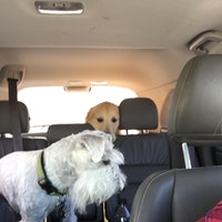 Dog Boarding Draper