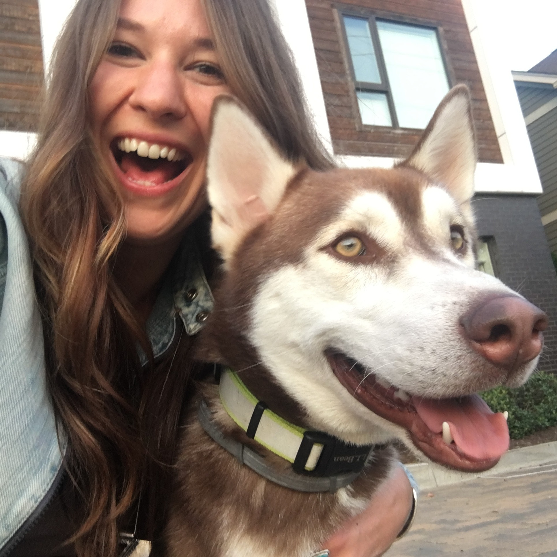 RaShelle's dog day care