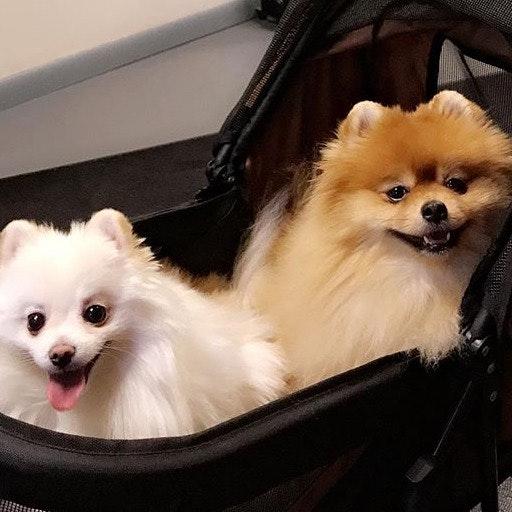Pantira's dog day care