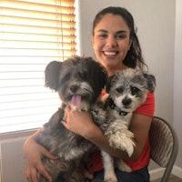 Vivianna's dog day care