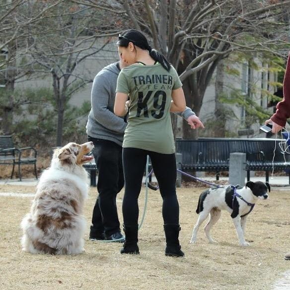 Adi's dog day care