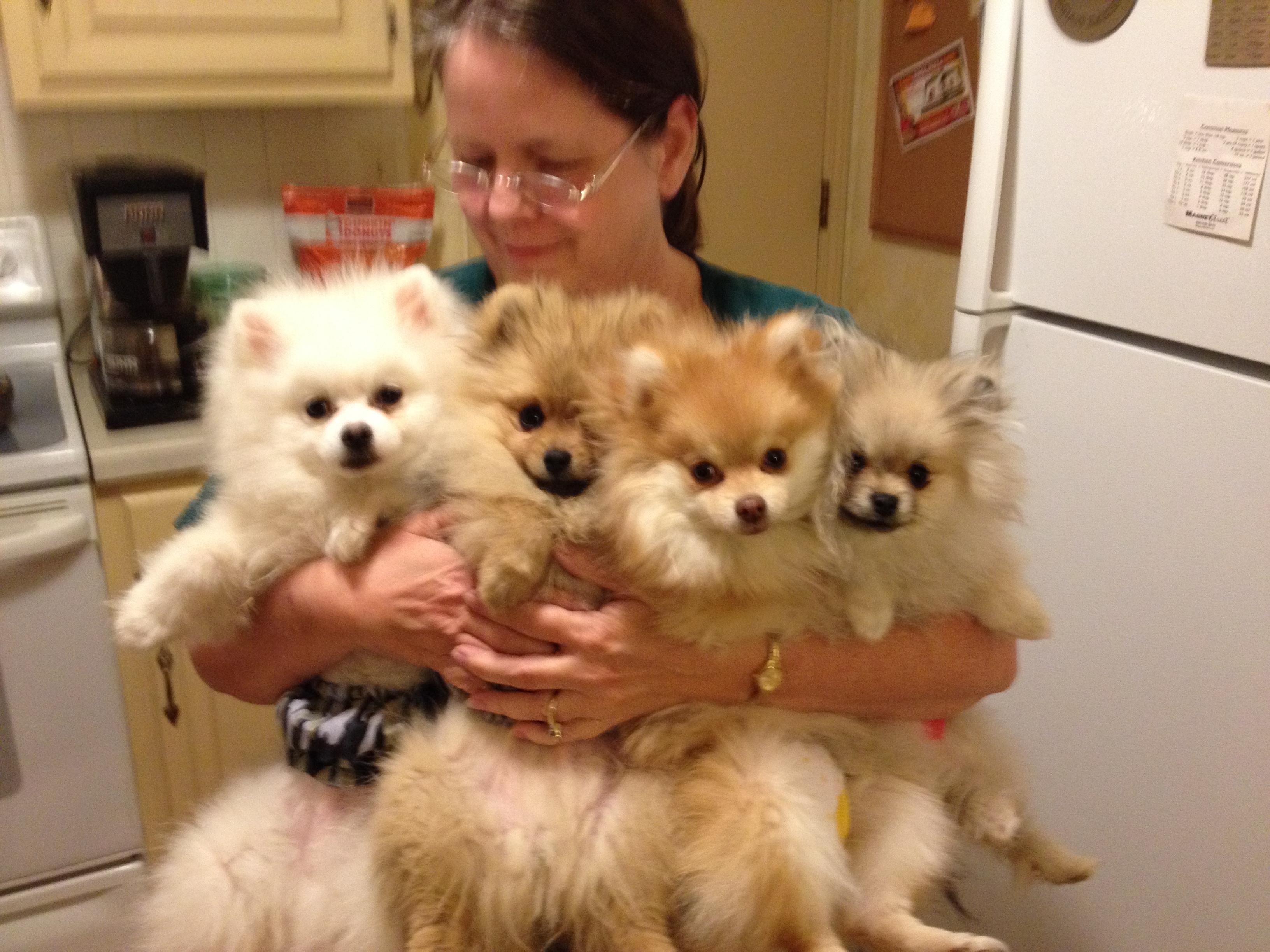 Ann's dog day care