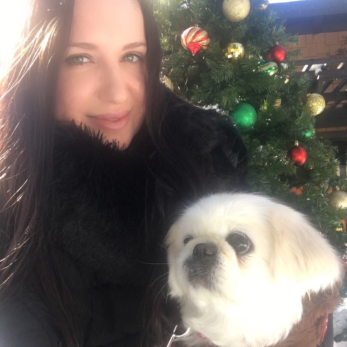 Natasha's dog day care