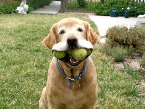 Rene's dog day care