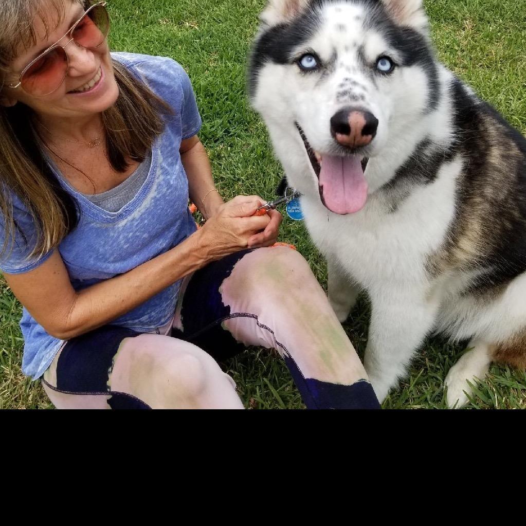 Beatriz's dog day care