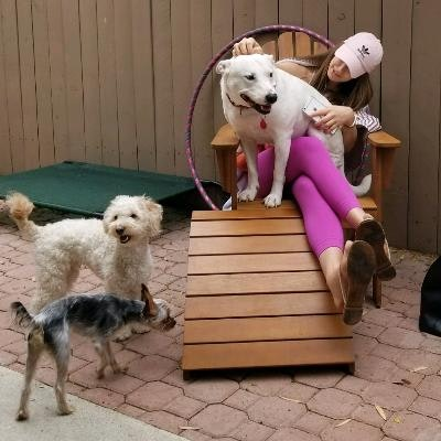 Brittany's dog boarding