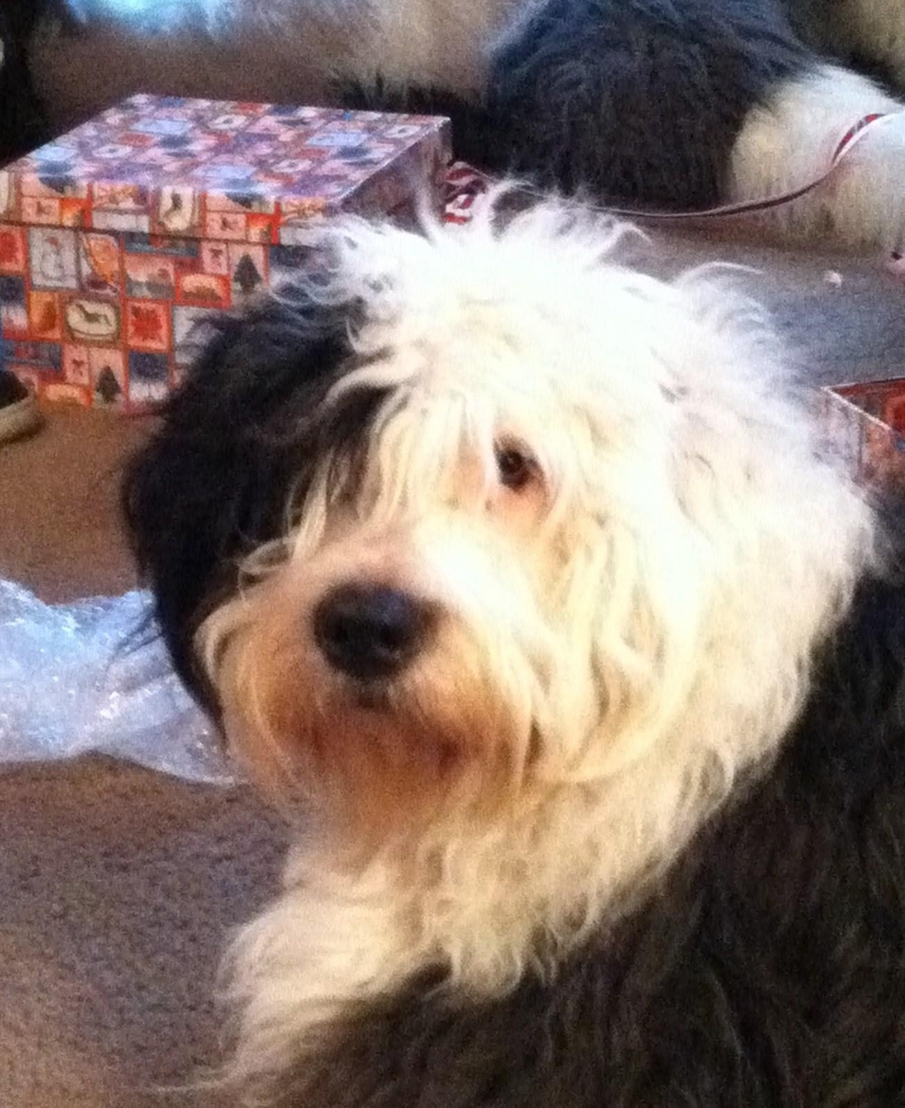 dog walker Donal