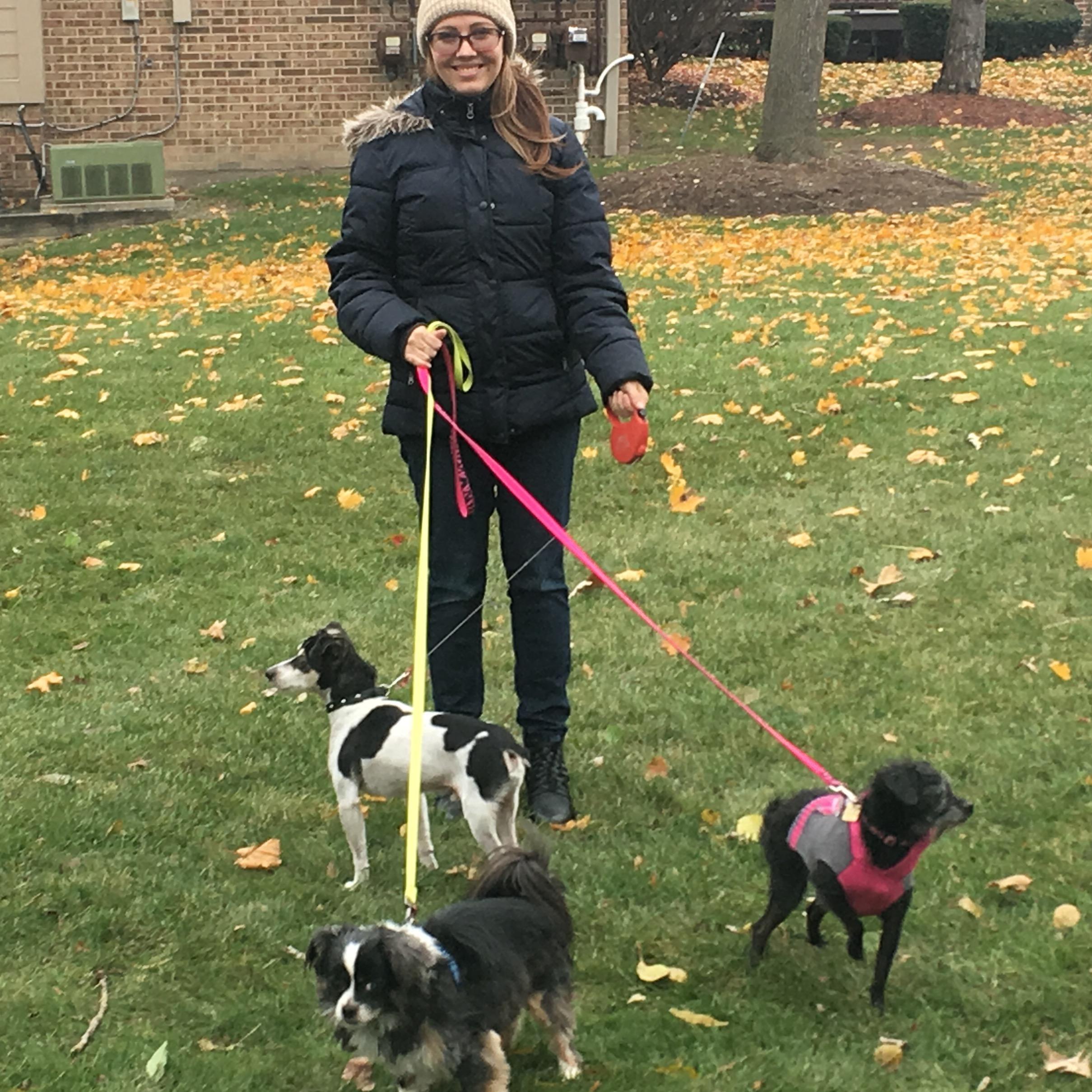 Kseniya's dog day care