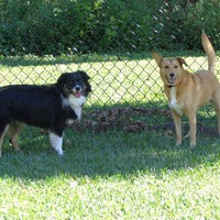 Palm Beach Gardens 39 S Best In Home Doggy Day Care