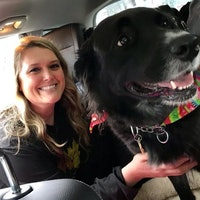 Salenia's dog day care