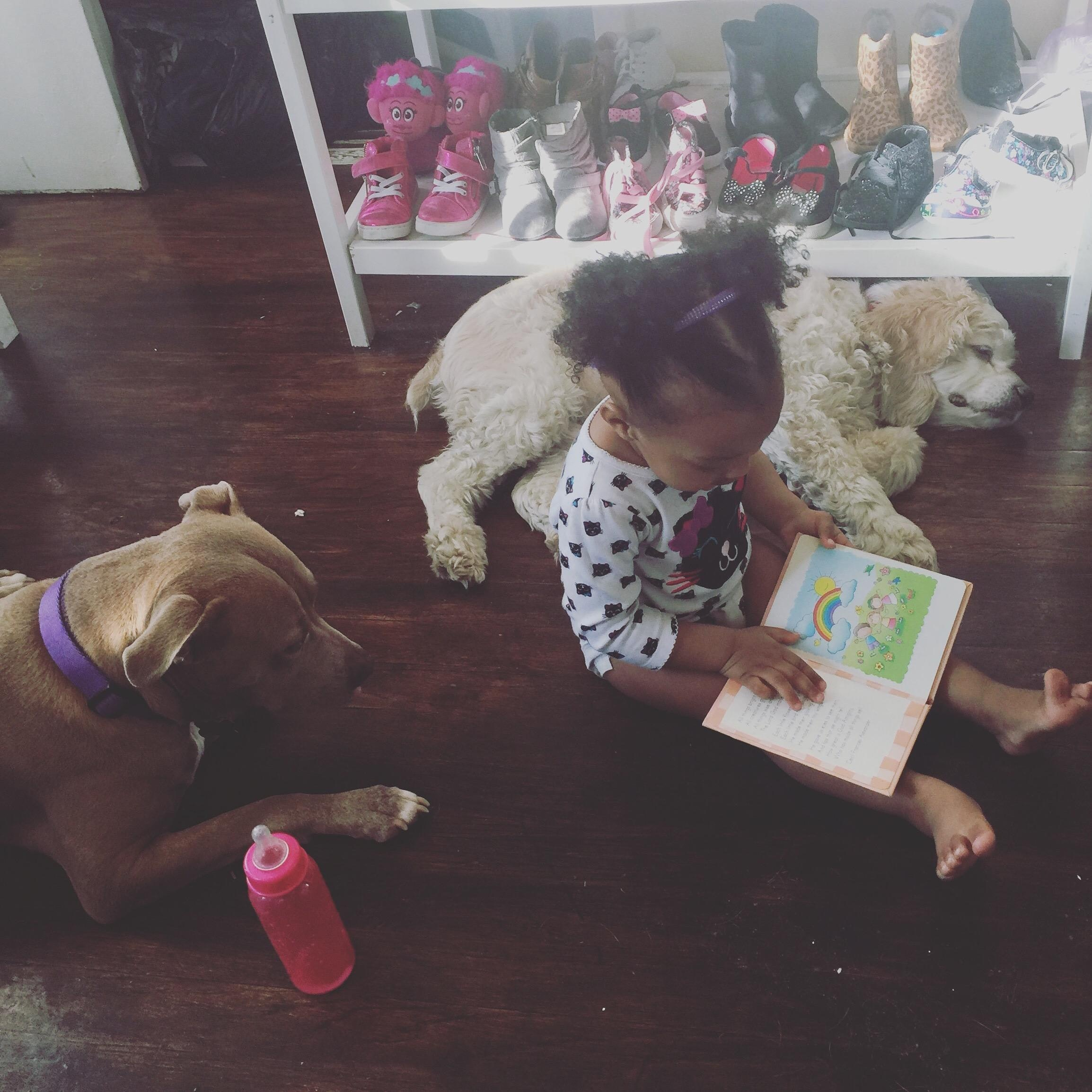 Shantell's dog day care