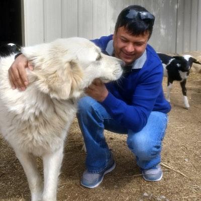 Jitman's dog day care