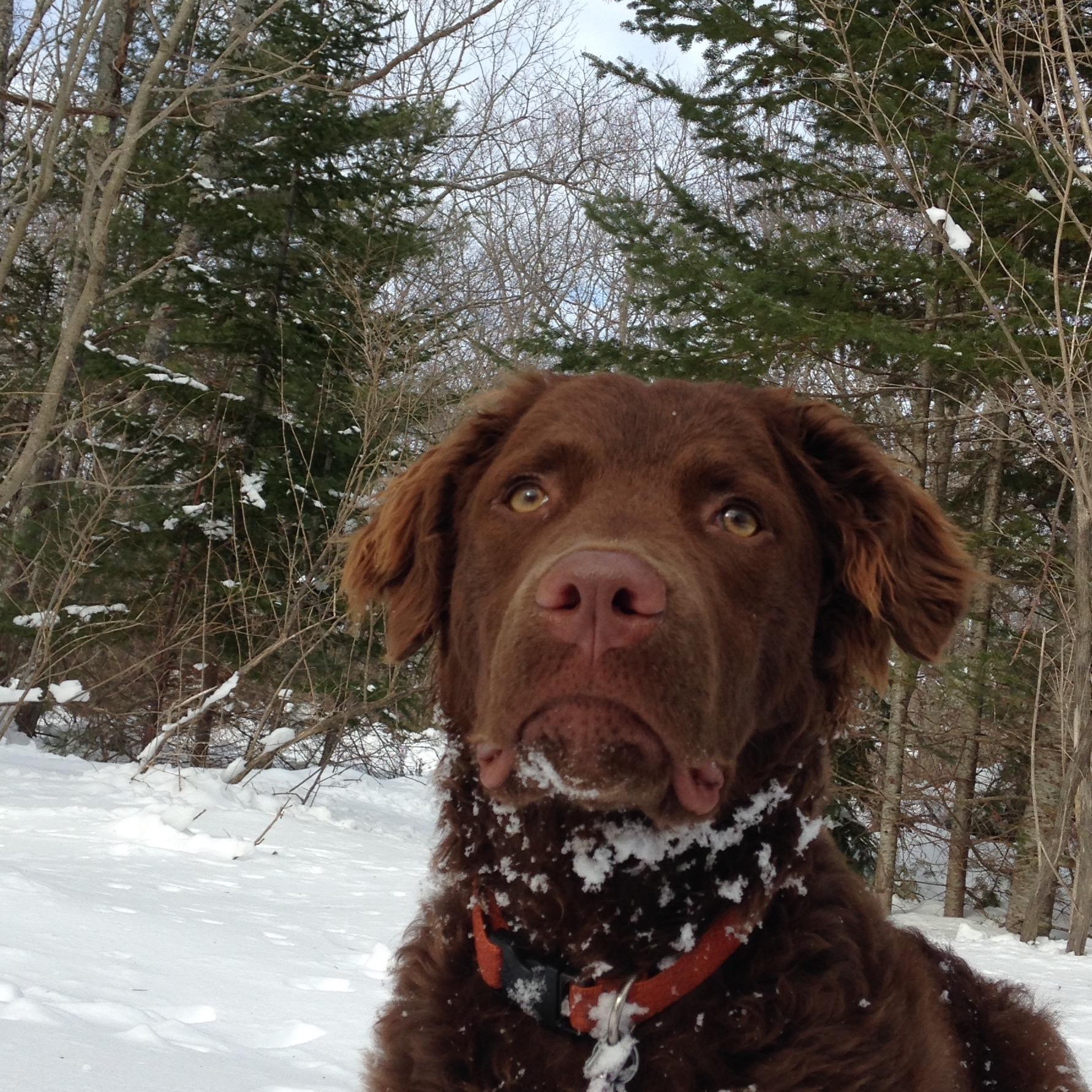 dog walker Kaley