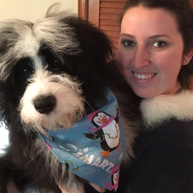 Shea's dog day care