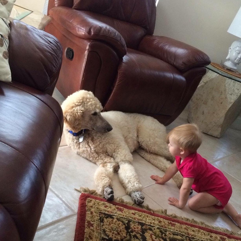 Sue's dog boarding