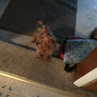 dog walker Shawny