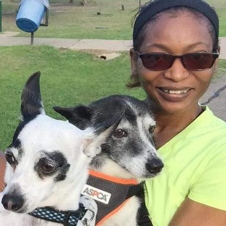 Apphia's dog day care