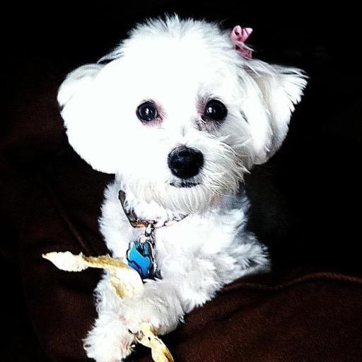 dog walker Meghan