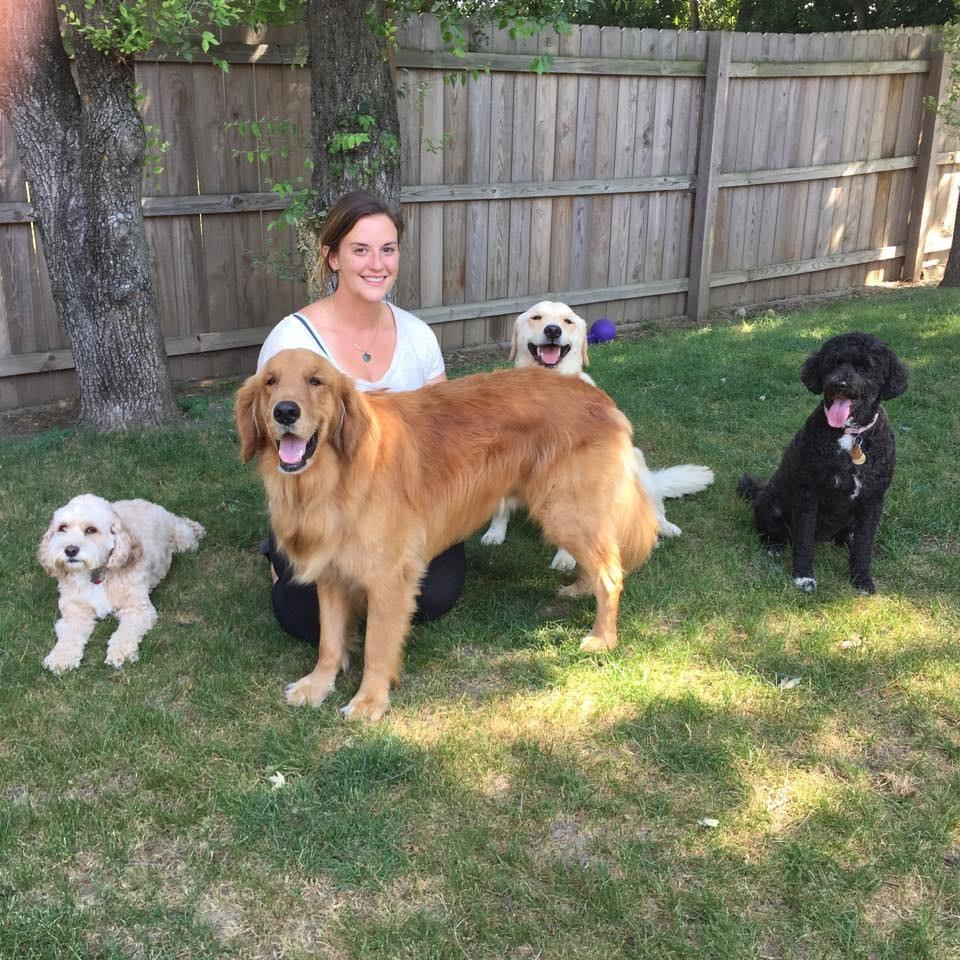 Adele's dog day care