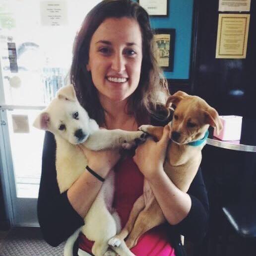 Elyse's dog day care