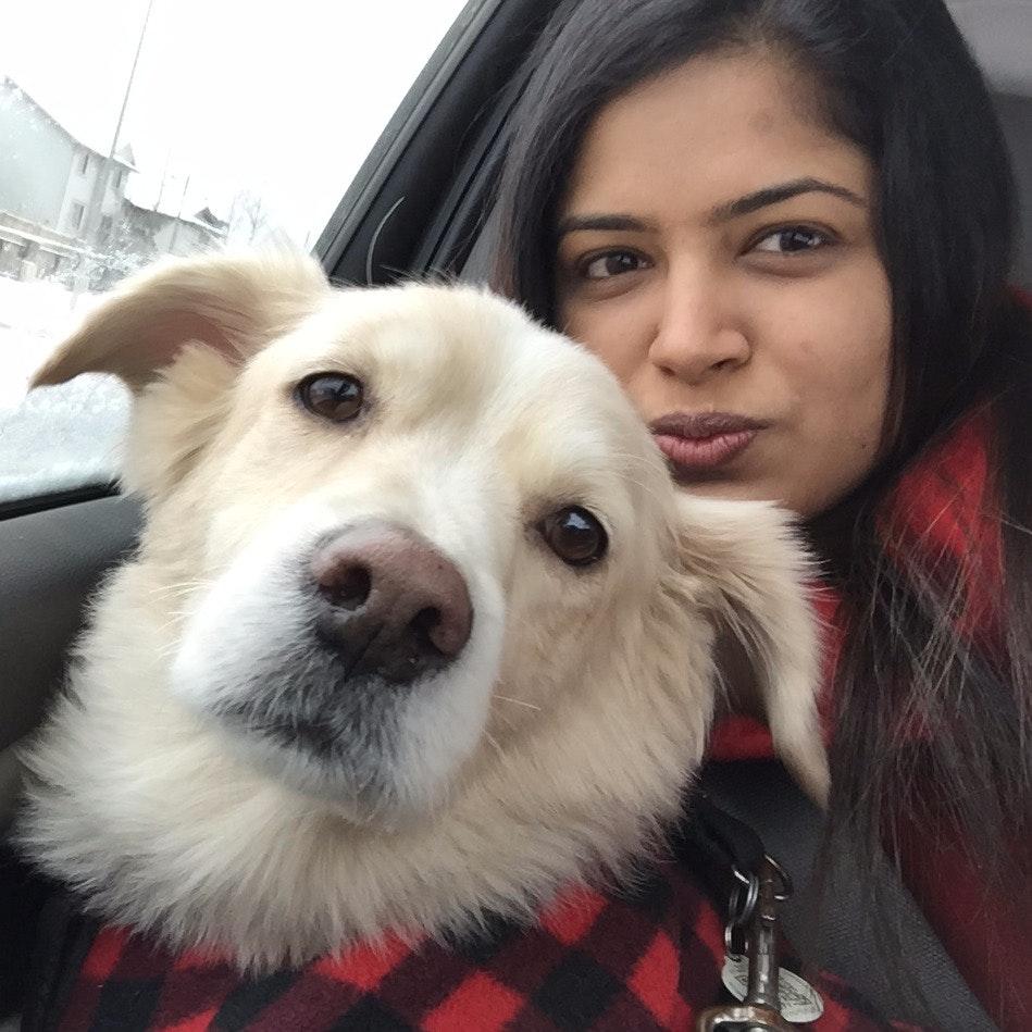 drasti's dog day care