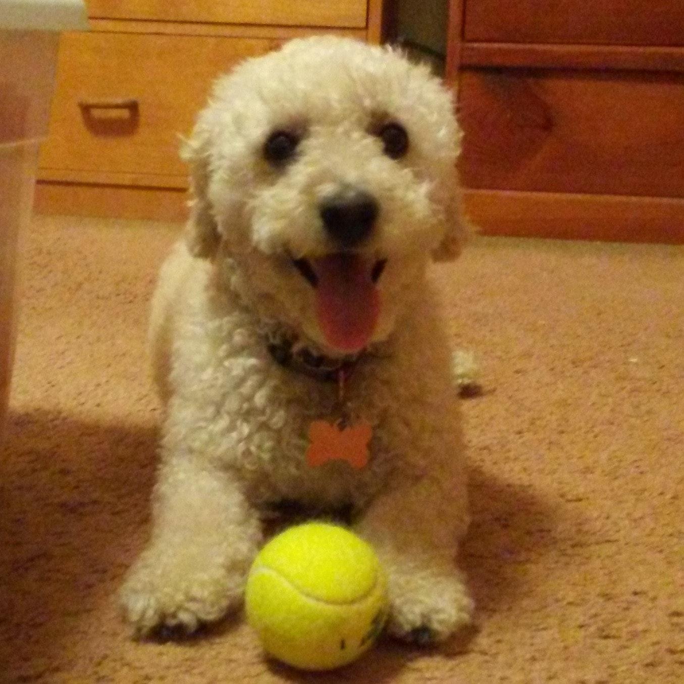 dog walker Lucy