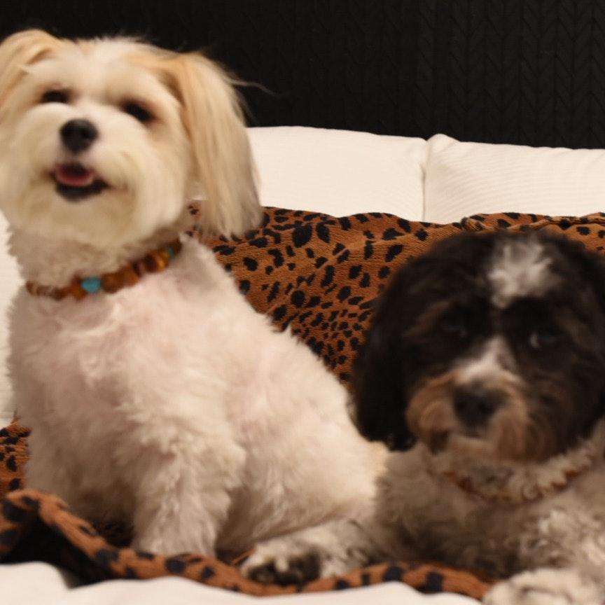 Rhonda's dog day care
