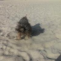 Best Dog Boarding Costa Mesa